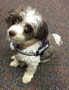 Dulci, our service dog