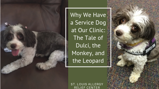 the tale of our service dog, dulci