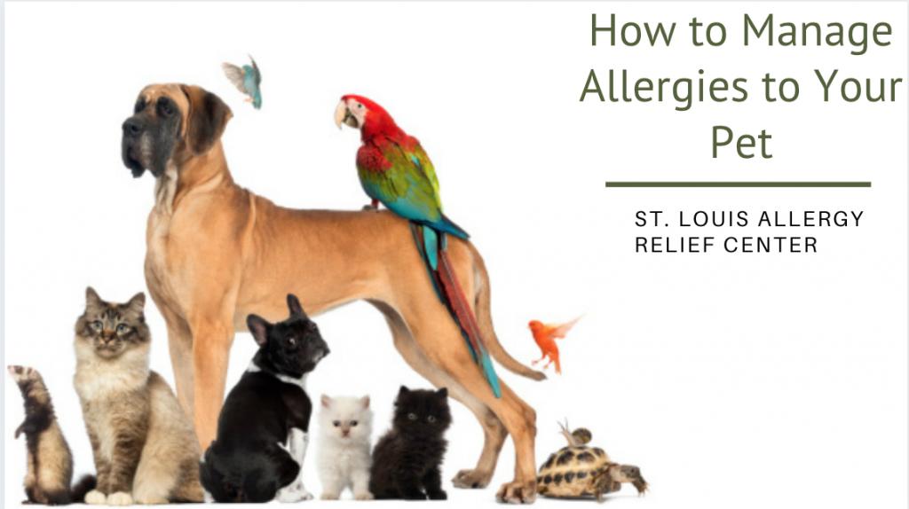 manage pet allergies